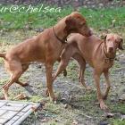 Artur a Chelsea