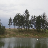 Koldínská příroda