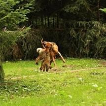 Vítěz Lesních zkoušek